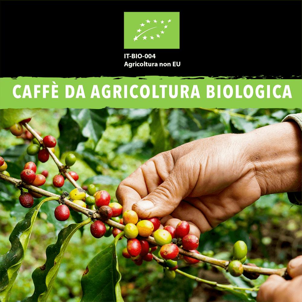 5 Caffè da agricoltura biologica King Cup